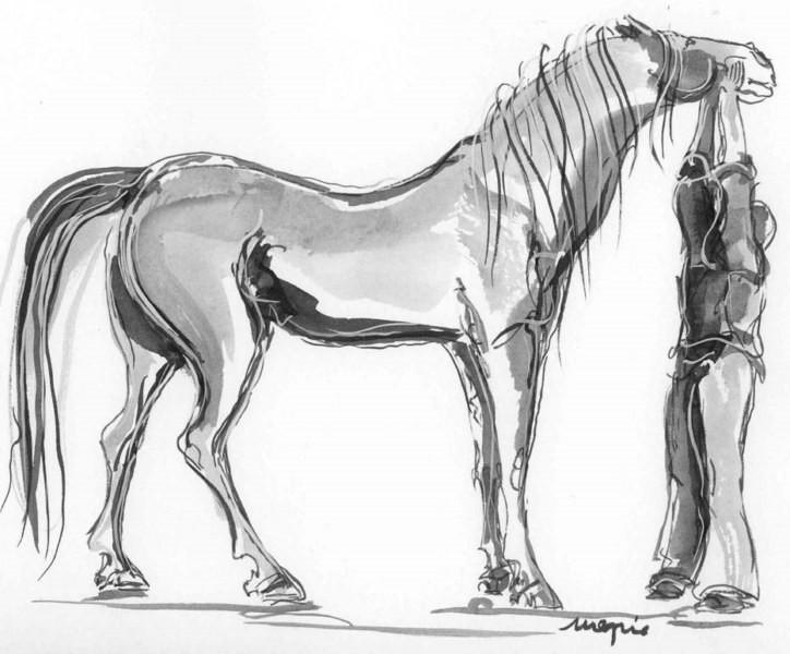 Ecole les jeunes pousses le sport du cheval - Dessin anime des chevaux ...